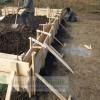 Cofrag fundatie casa din lemn